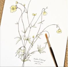 ©Hackney & Co Day 1 #watercolour #meadowbuttercup #the100dayproject #100daysofillustration, #hackneyandco100days #artistsofinstagram #hackneyandco #botanicalprints #orkneywildflowers #handillustrated