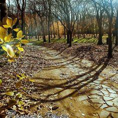 【ranger_maeda】さんのInstagramをピンしています。 《おはよーさぁ〜ん😃✌️ 今朝もスッキリ爽やかに目覚めたかな? ...さて❗️今朝の、レンジャー's picはね 冬の か弱い太陽の光でも、大地を温めるために 樹々たちは光を遮る葉を落とし、大地に届けやすくしてるのかも〜 そして温まった大地が、春の準備をする… そんなコトを感じる、すっかり葉の落ちた小径のシーン 😊 .. じゃ❗️ さっぶいけど💦 風邪ひかんよ〜に、体調管理バッチリして 今日も合言葉は Keep smilingで、ハッピーに行こうぜ👍✨ ...俺の仕事系galleryも見て➡️@studio_model_ks... #photographer #レンジャー前田 の #photo #gallery #pic #ground #nature #forest #winter #tree #sunshine #森 #木 #林 #落ち葉 #光芒 #そんな感じ の #風景 #写真》