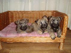 Jura,Tessa,Bandit