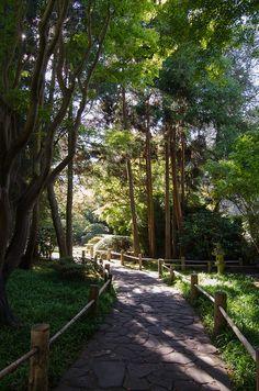Japanese Tea Garden  Golden Gate Park  San Francisco, CA