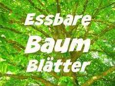 Essbare Baumblätter - Essbare Baumblätter – die Wildkräuterfee You are in the right place for di surgical mask free -