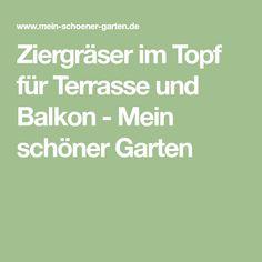 Ziergräser im Topf für Terrasse und Balkon - Mein schöner Garten