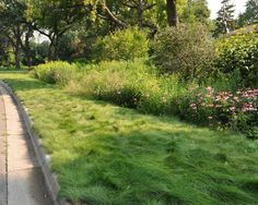No-Mow fescue with a tall prairie planting behind, landscaping, gardening, ornamental grasses, perennial,