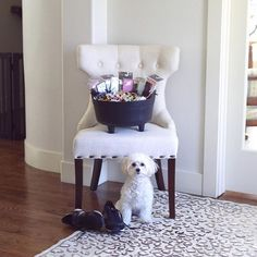 Happy Halloween!! :jack_o_lantern: I sent out goodie bags to J's nieces + nephews and got our cauldron ready for the trick or treaters... But now the candy is just staring at me :lollipop::chocolate_bar::candy: Lola feels the same!! What's your favorite k