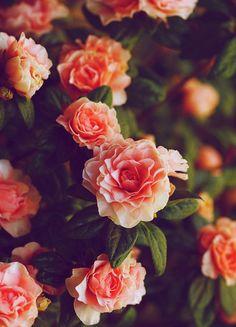 ola ke ase ve a las flores o ke ase? | via Facebook | We Heart It