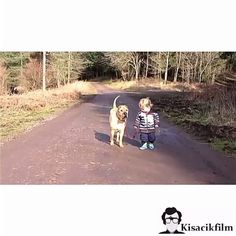 Terapi gibi , iyi geliyor  #kisacikfilm #bestfriend #cuma #therapy #children #dog