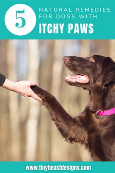 Is your dog super itchy and can't stop scratching and biting? Click the link to learn some super simple and easy home remedies that can help relieve your dog's itching. These treatments are all natural and really work to stop your dog's itching!