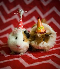 And these two piggies who know it's the cutest year ever because THEY'RE IN IT.