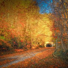 Road to Nowhere - We Found the South's Best Fall Color - Southernliving…