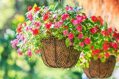 ***¿Cómo hacer Tiestos con Objetos Reciclados?*** Aprende a hacer tiestos originales con objetos en desuso, utilizando materiales naturales, y hasta algunos que no habías imaginado. ¡Tus plantas y flores te lo agradecerán!...SIGUE LEYENDO EN... http://comohacerpara.com/hacer-tiestos-con-objetos-reciclados_10745h.html