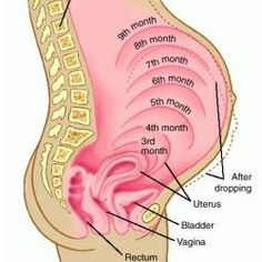 SYMPTOMS OF PREGNANCY