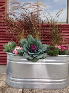 Horse water trough converted into a planter outside our studio . Fall theme using ornamental kale, mums and decorative grasses . iPhone photo by Katalin Green. Galvanized Planters, Trough Planters, Fall Planters, Flower Planters, Garden Planters, Flower Pots, Ornamental Kale, Backyard Landscaping, Backyard Patio