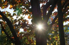 Colored leaves and the sunlight