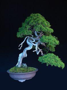 www.jonathan-sing... #bonsai #gardening THE BEST HOME GARDENING GUIDE IS WAITING FOR YOU.