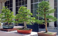 Landscape bonsai | Cuba Contemporánea