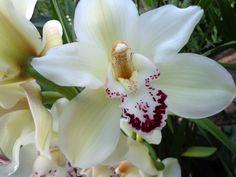 Image from http://www.zeroluck.com/wp-content/uploads/2013/08/orchidea-foto-immagine-1376835531kn48g.jpg.