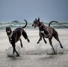 Dog Run - http://allaboutmydogs.com/dog-run-best-dog/