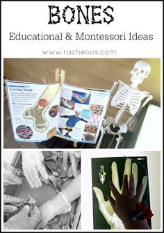 Bones  Educational Montessori Activities