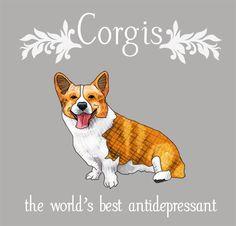 Playfull Pembroke Welsh Corgi Puppy And Kids Corgi Funny, Cute Corgi, Corgi Dog, Pet Dogs, Weenie Dogs, Cowboy Corgi, Cardigan Welsh Corgi, Pembroke Welsh Corgi, Queen