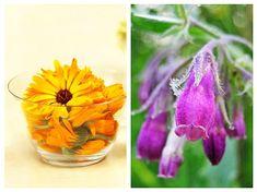 Cele mai bune CEAIURI pentru infecția cu Helicobacter pylori | LaTAIFAS Glass Vase, Flora, Health Fitness, Homemade, Healthy, Plants, Apothecary, Diet, Pharmacy
