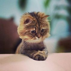 #likeback#cuteanimals#pics#beautifulpics#animalsimag I Love Cats, Cute Cats And Kittens, Kittens Cutest, Cool Cats, Crazy Cats, Pretty Kitty, Pretty Cats, Beautiful Cats, Animals Beautiful