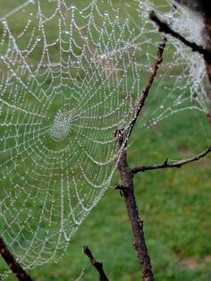 Spider Webs Photography Contest, Pictures Page 1 - Pxleyes.com