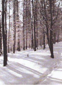 Ptaki Polski - ochrona, zagrożenia, ekologia, środowisko