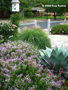 plants for the arizona desert xeriscape landscape gardening