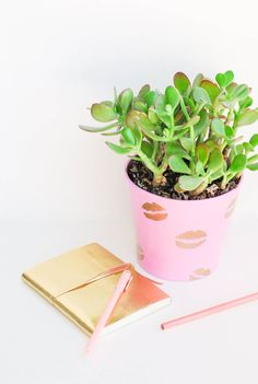 Dress up even your plants for Valentine's Day with these DIY Pucker Planters