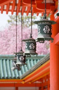 Lanterns with Sakura Cherry Blossom at Heian Shrine (Kyoto, Japan)|京都 Photo Japon, All About Japan, Culture Art, Sakura Cherry Blossom, Cherry Blossoms, Blossom Trees, Art Asiatique, Japan Art, Japan Japan