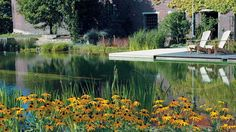 """avoid toxic """"pool chemicals"""" and get a #naturalpool instead!  They use the plants all around the water to keep it clean instead of the chlorine and other chemicals used in traditional swimming pool."""