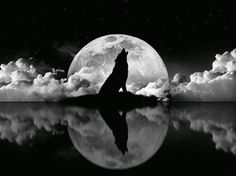 Lone Wolf Moon ~
