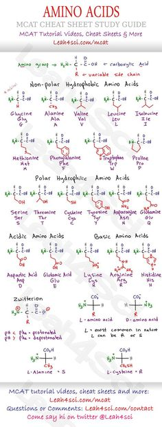 MCAT Amino Acid Chart - Study Guide Cheat Sheet for the Biology/Biochemistry section on the MCAT. Includes structure, variable groups, hydrophobic/hyrophilic acidic and basic groups: