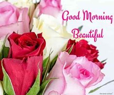 Best Good Morning Wishes For Girlfriend - Page 8 of 13 Good morning roses for a beautiful girl. Good Morning Handsome Quotes, Good Morning Love Text, Good Morning For Her, Morning Wishes For Her, Morning Message For Him, Romantic Good Morning Messages, Good Morning Roses, Good Morning Images Flowers, Good Morning Beautiful Quotes