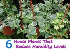 6 House Plants That Reduce Humidity Levels