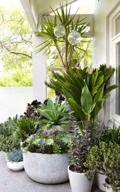 Pots and greenery