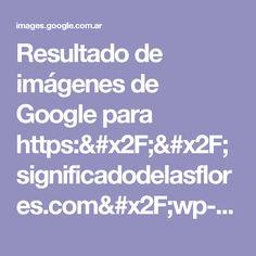 Resultado de imágenes de Google para https://significadodelasflores.com/wp-content/uploads/2015/05/am_883231_6833079_621946-1024x768.jpg