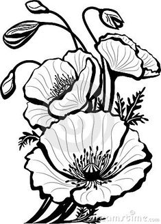 Poppy Drawing by Anna Farba Botanical Illustration Studio in poppy flower drawing Sketch of poppy flowers vector image on Poppy Drawing, Floral Drawing, Drawing Flowers, Flower Outline, Flower Art, Poppy Flower Painting, Flower Sketches, Drawing Sketches, Tattoo Sketches