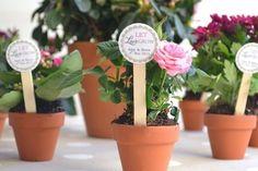 Risultati immagini per bomboniera pianta di rose