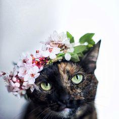Le chat de la Sainte Lucie!