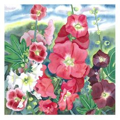 Botanical Flower Watercolour Hollyhocks  Limited by michelewebber, £45.00