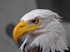 JoanMira - 1 - World : Artigo - Benfica: A aguia continua a voar cada vez...