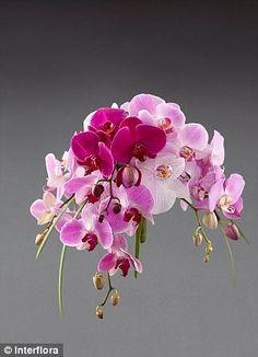Très beau bouquet #interflora.  1,50€ remboursés sur tout le site Interflora via eBuyClub => www.ebuyclub.com/interflora-512?trckpro=Pinterest_partage
