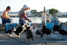 2011年03月 : Cats in Town Blog