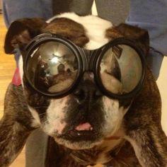 Bulldog Biker Collection (photos and videos)