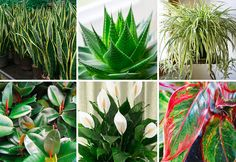 Everyone would love to have a fresh, clean living space to come home to each day, and while part of that is up to us, we can put some house plants to work to keep our air clean quite effectively. ...