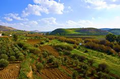 Small olive farms at the Jordanian country side.