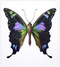 Artist...  margaretsaylor.co... ❦.Butterfly ❦