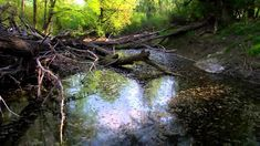 The Danube   From the Black Forest to the Black Sea Save Wildlife, Black Sea, Black Forest, Rivers, Romania, Mississippi, Habitats, Film, Documentaries