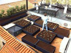 Conheça a horta inteligente, ideal para quem tem pouco tempo e espaço: http://ciclovivo.com.br/noticia/horta-inteligente-e-ideal-para-quem-tem-pouco-espaco-e-tempo